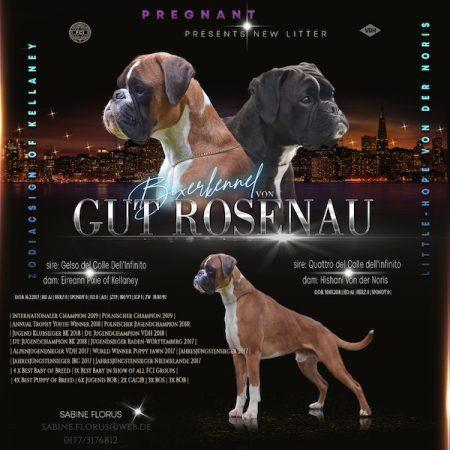 Wurfankündigung Gut Rosenau Boxer